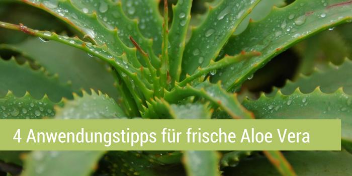 Frische Aloe Vera 4 Einsatzmöglichkeiten für zu Hause